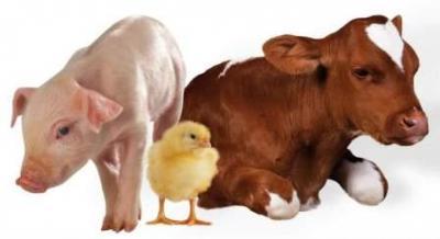 Использование витаминов в кормлении сельскохозяйственных животных